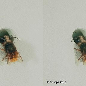 3D pictures in-flight insects 2013.