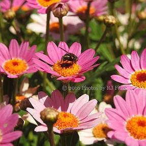 COOLPIX P900 Photos.........