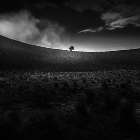 Single Tree: a landscape B&W photography