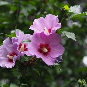 C & C Flowers