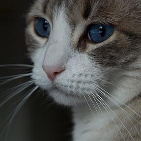 :-)) Sunday Cat! #521 October 8, 2017 ((-: