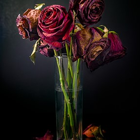 Still Life with Roses - Color