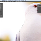 Tutorial: Master the Photoshop Pen Tool in under 8 minutes