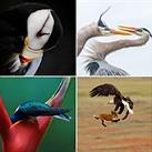 Slideshow: The winners of the 2019 Audubon Photography Awards