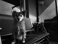 Leica Q2 Monochrom sample gallery