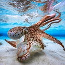2017 Underwater Photographer of the Year: winning photos announced