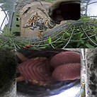 Nikon KeyMission 360 records itself getting chewed on by a tiger
