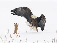 幻灯片:迄今为止,2021年喜剧野生动物奖的最佳作品