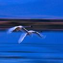 Field Test: Birds in flight with the Nikon D500