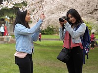 Ask the staff: How are you shooting the cherry blossoms?