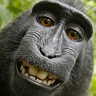 Photographer behind famous 'monkey selfie' is broke after years-long copyright battle
