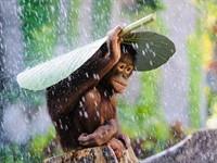 Orangutan photo snags Sony World Photo prize for DPR reader