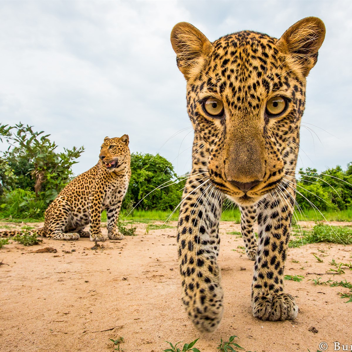 Close Encounters: Will Burrard-Lucas' wildlife photography: Digital  Photography Review