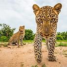 Close Encounters: Will Burrard-Lucas' wildlife photography