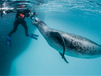 NPR's Terry Gross talks with conservation photographer Paul Nicklen