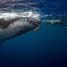 Photo story of the week: Swimming with Humpback whales in Tonga
