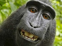PETA is close to settling that ridiculous monkey selfie lawsuit