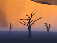 Desert Oddity: Shooting Under Rare Conditions in Namibia