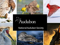 Slideshow: Winners of the 2021 Audubon Photography awards