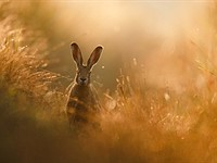 Slideshow: The winner and finalists from the 2020 GDT Nature Photographer of the Year contest