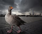Winners announced for 2014 British Wildlife Photography Awards