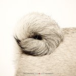 How to shoot creative canine photographs: Composition and dog behavior