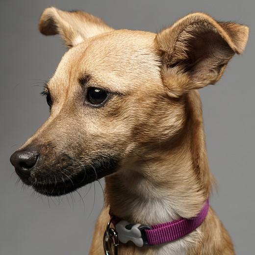 Simple Studio Technique: Pet Portraits 10