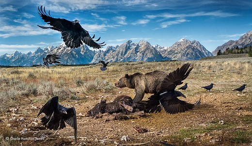 Wildlife Photographer of the Year 2016 winners announced 10