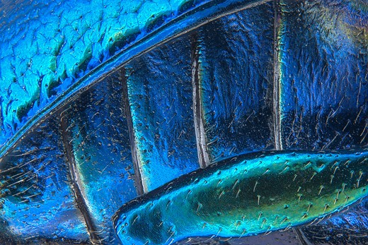 Vote now for your favorite Nikon Small World 2016 entries 4