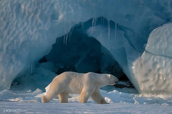7c0b0f20001e Shooting polar bears with the  12