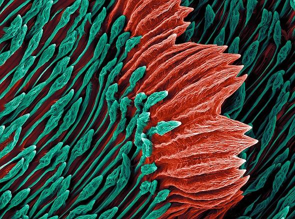 IGPOTY 3rd Place, Abstract Views: <em>'Tragopogon porrifolius'</em> by <a href=