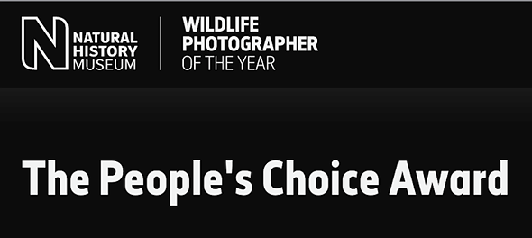 People's Choice Award finalists for Wildlife Photographer of the Year