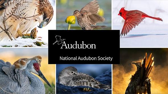 Winners of the 2021 Audubon Photography awards