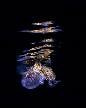 Todd Bretl's captivating underwater photography