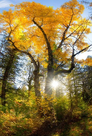 6 tips for shooting fall color