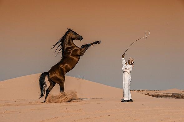 Winner, National Awards: 'Horse Motion' by Abbas Alkhamis (Saudi Arabia)