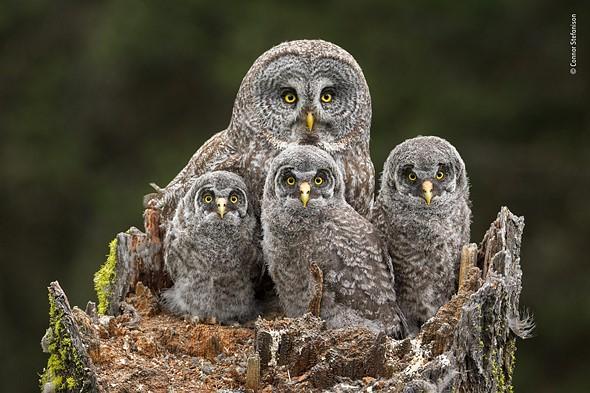 Family Portrait by Conner Stefanison, Canada