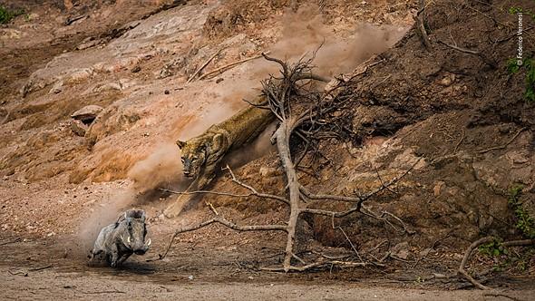 Ambush by Federico Veronesi, Kenya