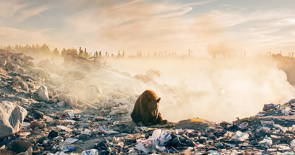 Photo story of the week: A heartbreaking photo of a bear in a landfill