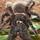 Tarantula Guy