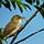 Birdroyfinn