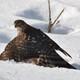 Falconest174