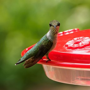 Well hello there  [hummingbird]