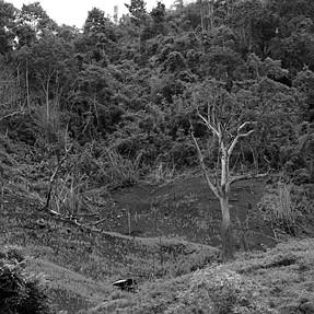 Deforestation station