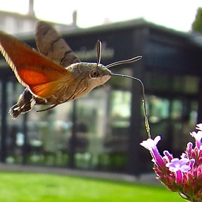 Insects in flight with an s120