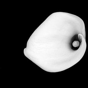 Float gannet