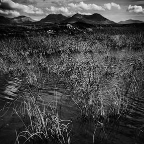 A Bog Lake View