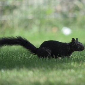 Testing the Nikkor 300 F4E and caught this little guy.