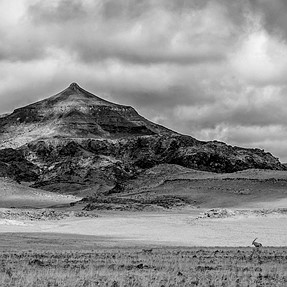 Lonely Oryx in Damaraland