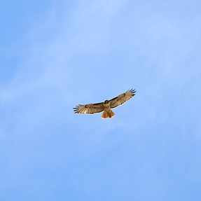 Show Your P-900 (or other) Pics of Birds in Flight
